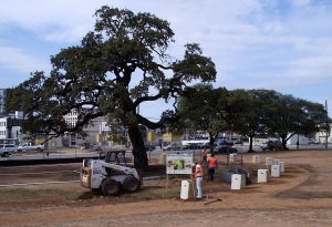 Looking west at the bollards surrounding the central auction oak